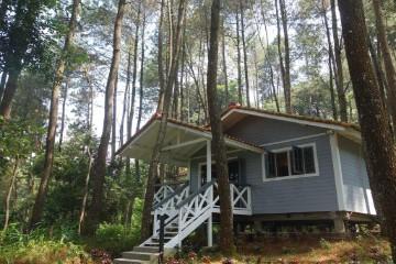 فيلات غابة الصنوبر The Pine Forest Villas