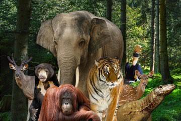 حديقة الحيوانات راغونان Ragunan Zoo