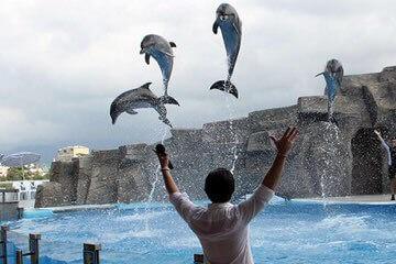 باتومي دولفيناريوم Batumi Dolphinarium