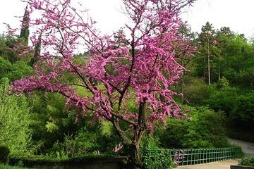 حديقة النباتات National Botanical Garden