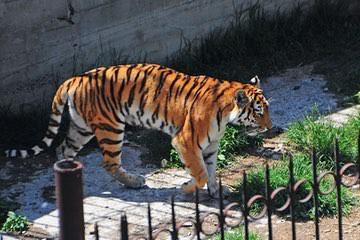 حديقة حيوان تبليسي Tbilisi Zoo