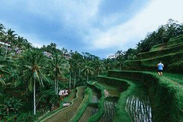 مدرجات الأرز تيغالالانغ في أوبود-  Tegalalang Rice Terrace